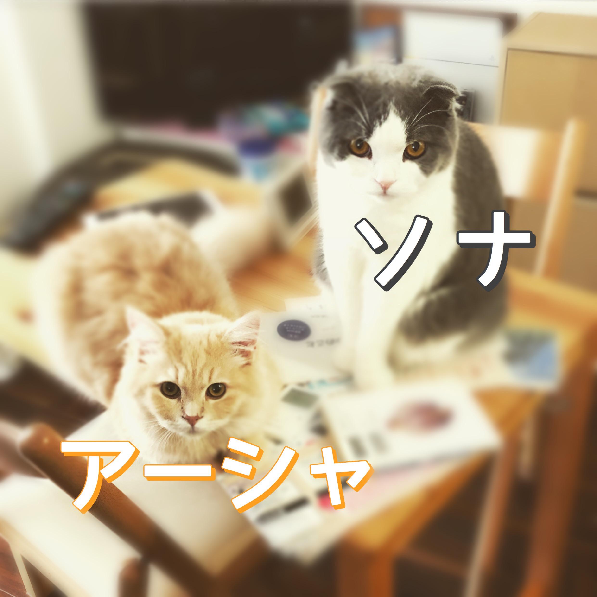 ソナ&アーシャ