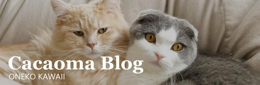 カカオマブログ